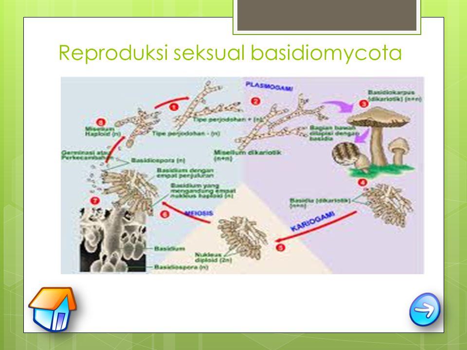 Reproduksi seksual basidiomycota