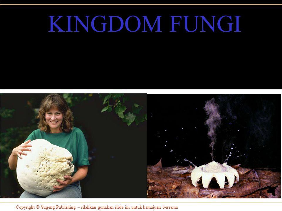 KINGDOM FUNGI Copyright © Sugeng Publishing – silahkan gunakan slide ini untuk kemajuan bersama
