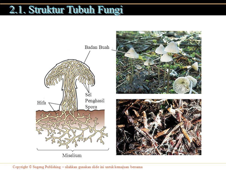 2.1. Struktur Tubuh Fungi Badan Buah Sel Penghasil Spora Hifa Miselium
