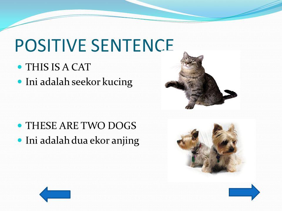POSITIVE SENTENCE THIS IS A CAT Ini adalah seekor kucing
