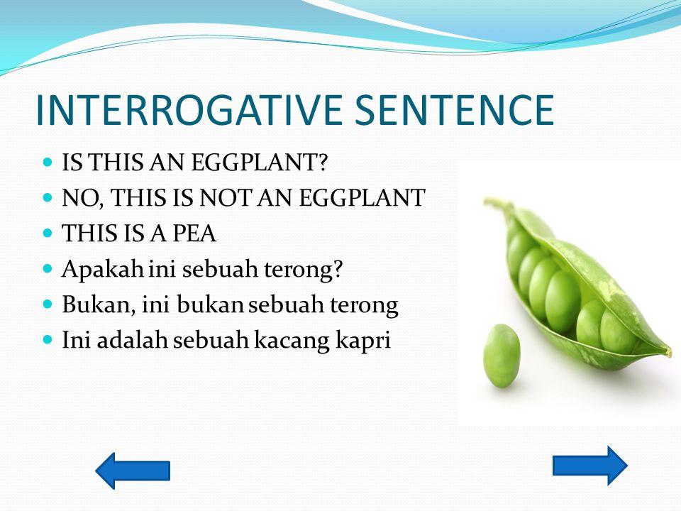 INTERROGATIVE SENTENCE