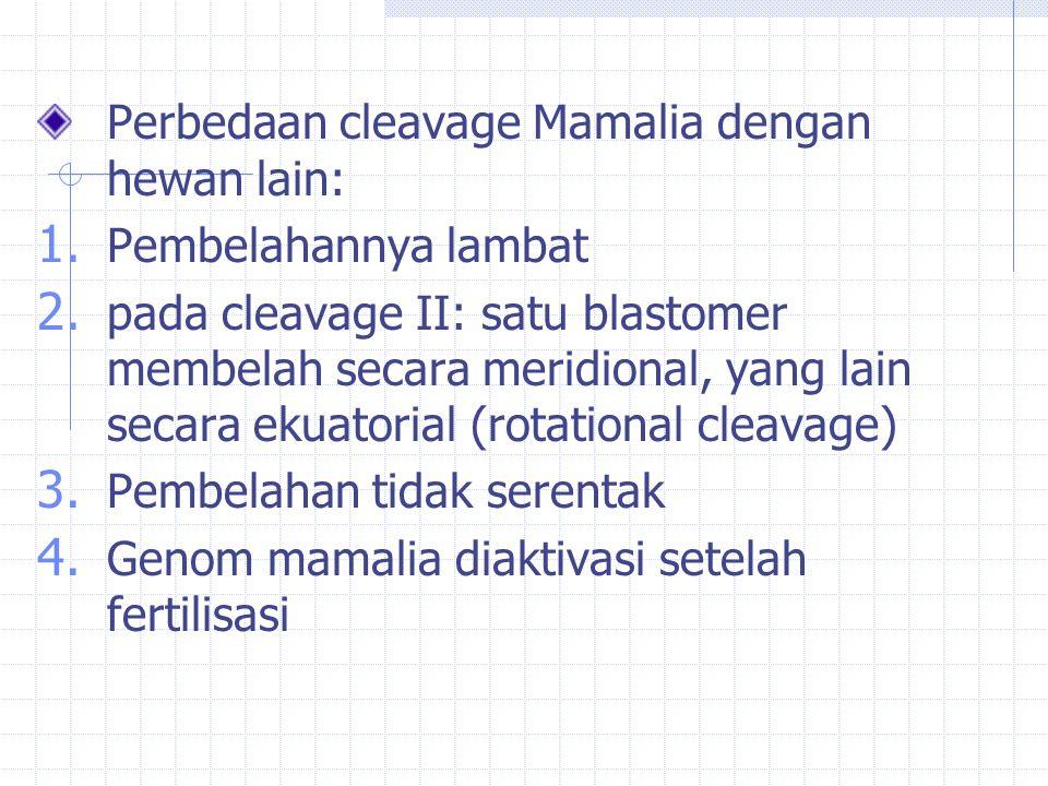Perbedaan cleavage Mamalia dengan hewan lain: