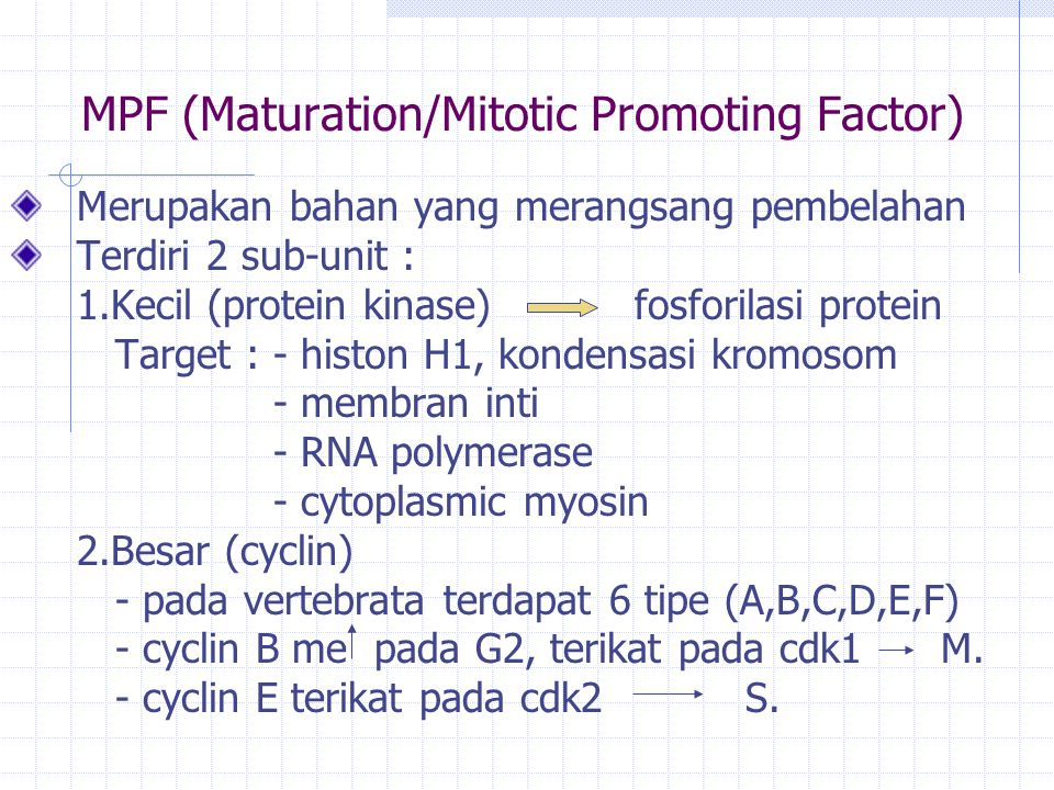 MPF (Maturation/Mitotic Promoting Factor)