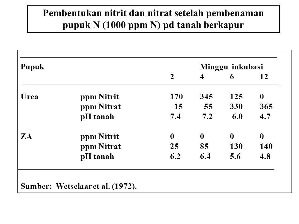 Pembentukan nitrit dan nitrat setelah pembenaman pupuk N (1000 ppm N) pd tanah berkapur