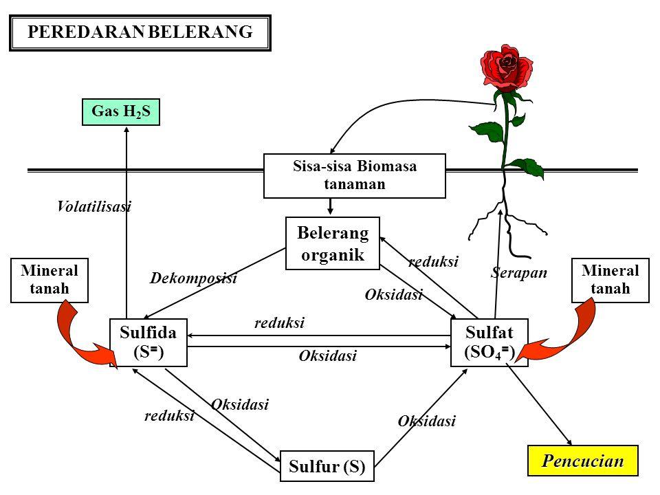 Sisa-sisa Biomasa tanaman