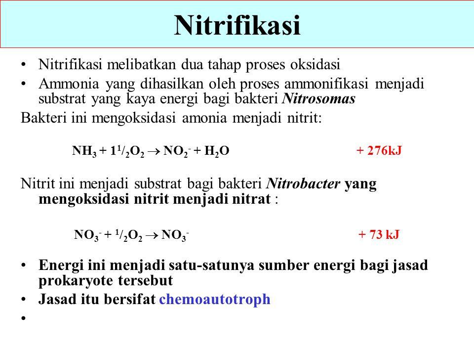 Nitrifikasi Nitrifikasi melibatkan dua tahap proses oksidasi