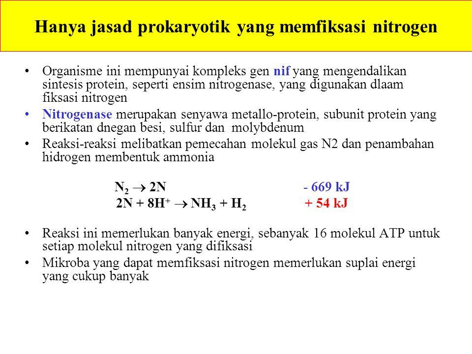 Hanya jasad prokaryotik yang memfiksasi nitrogen