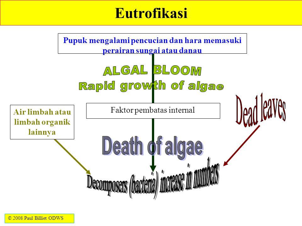 Eutrofikasi Pupuk mengalami pencucian dan hara memasuki perairan sungai atau danau. ALGAL BLOOM. Rapid growth of algae.