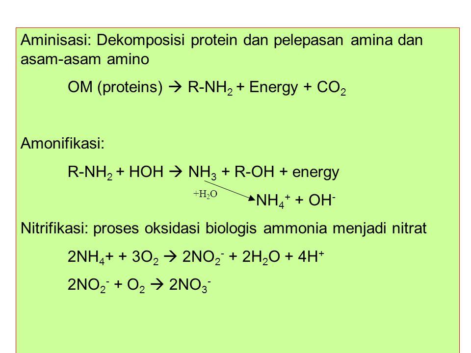 Aminisasi: Dekomposisi protein dan pelepasan amina dan asam-asam amino