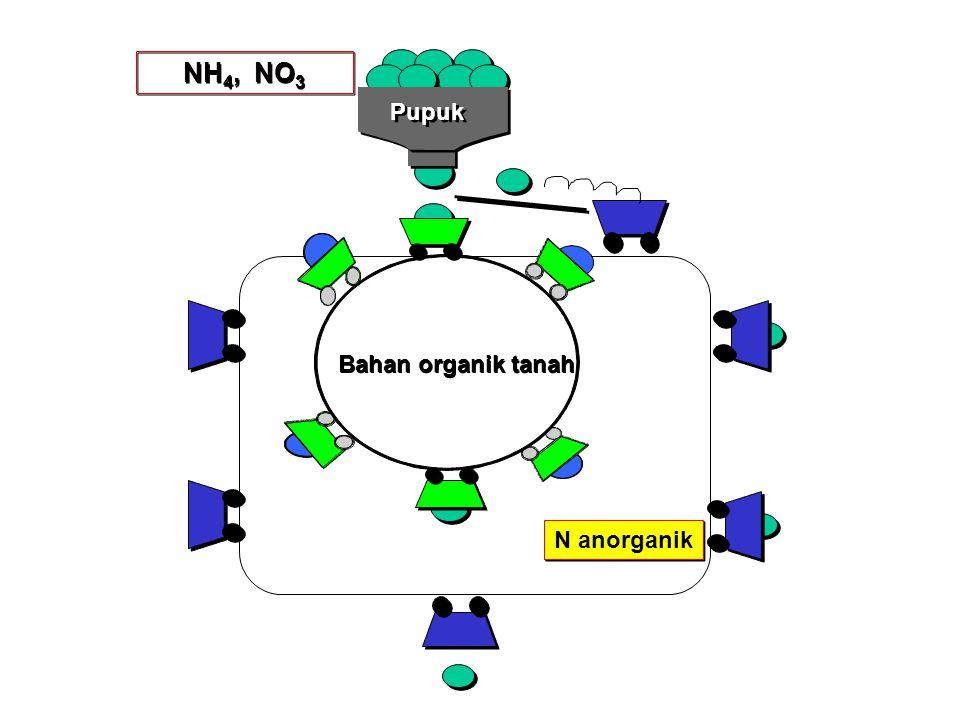NH4, NO3 Pupuk Bahan organik tanah N anorganik