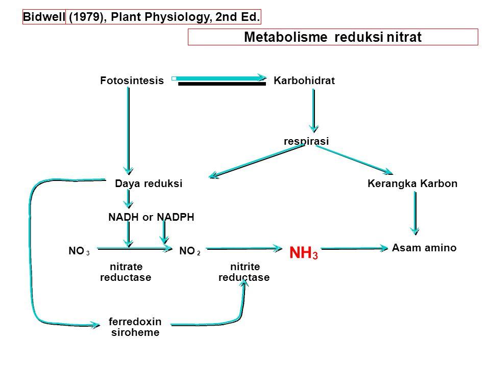 Metabolisme reduksi nitrat