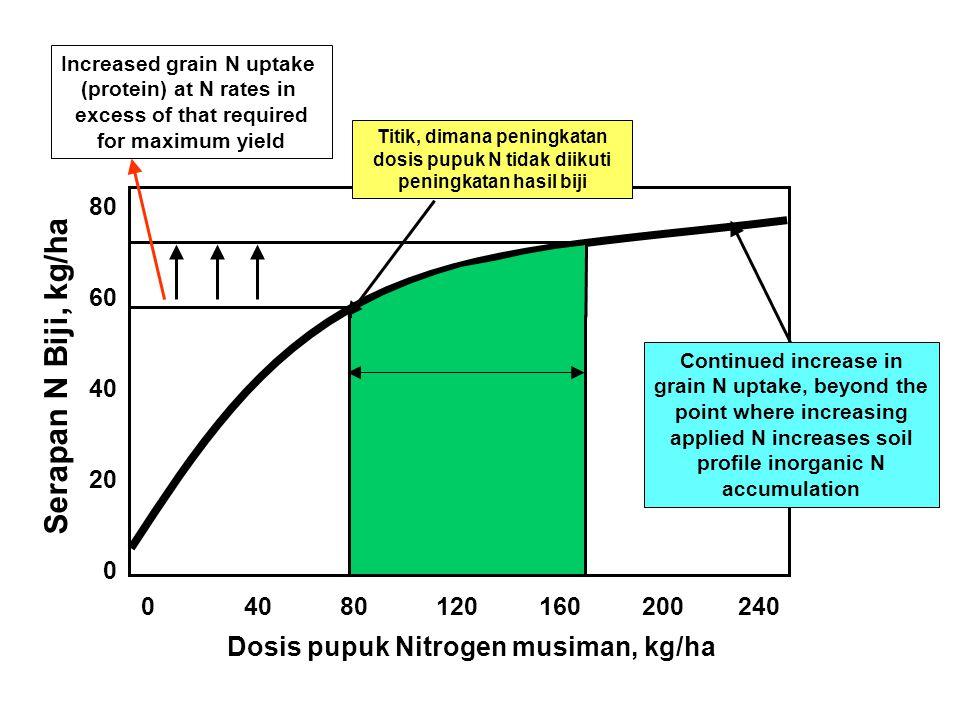 Serapan N Biji, kg/ha Dosis pupuk Nitrogen musiman, kg/ha 80 60 40 20