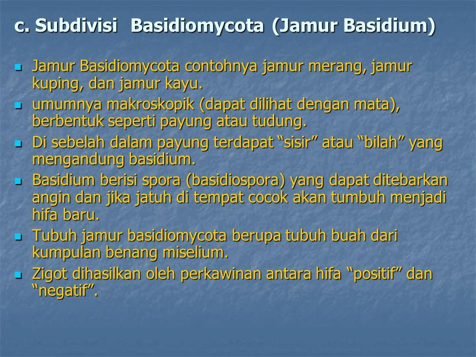 c. Subdivisi Basidiomycota (Jamur Basidium)