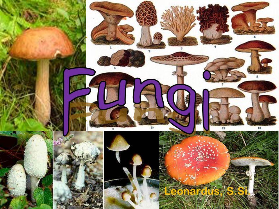 Fungi Leonardus, S.Si.