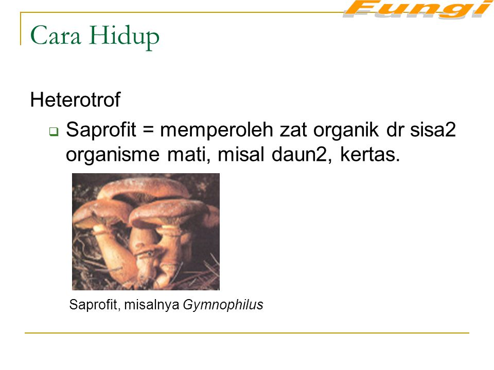 Fungi Cara Hidup. Heterotrof. Saprofit = memperoleh zat organik dr sisa2 organisme mati, misal daun2, kertas.