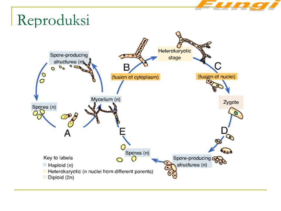 Fungi Reproduksi