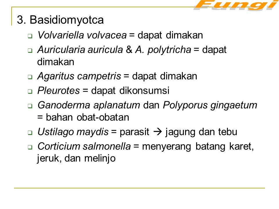 3. Basidiomyotca Volvariella volvacea = dapat dimakan