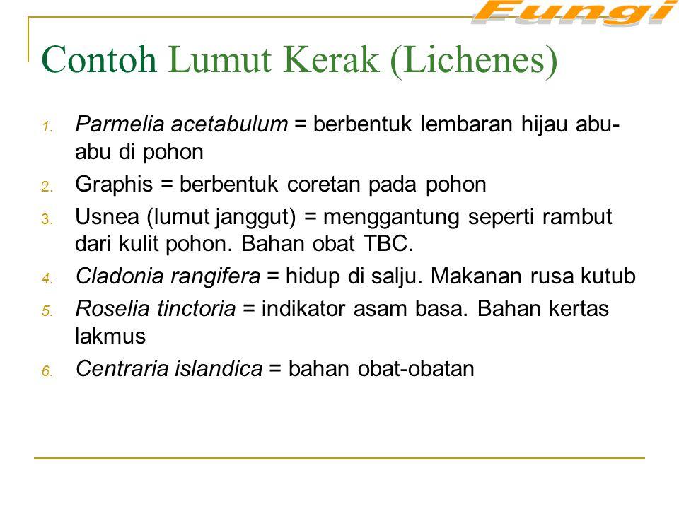 Contoh Lumut Kerak (Lichenes)