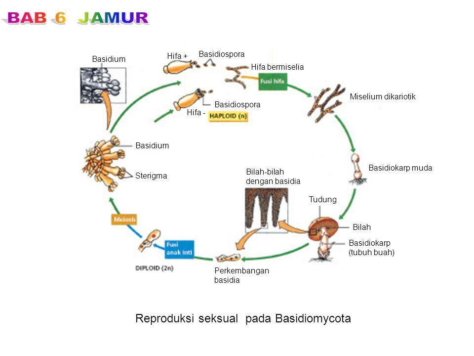 Reproduksi seksual pada Basidiomycota