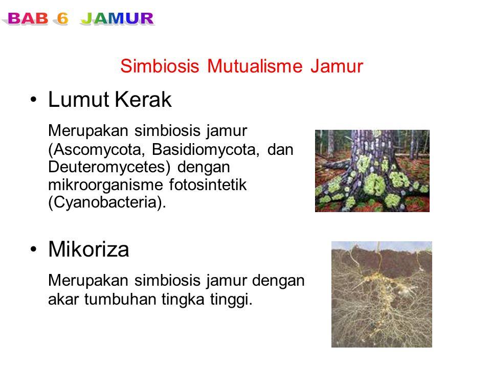 Simbiosis Mutualisme Jamur