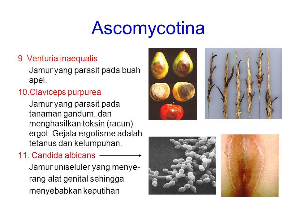 Ascomycotina 9. Venturia inaequalis Jamur yang parasit pada buah apel.