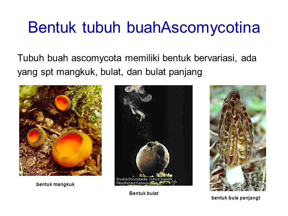 Bentuk tubuh buahAscomycotina