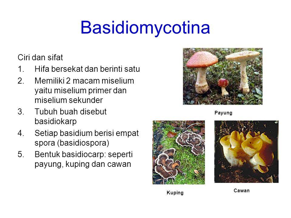 Basidiomycotina Ciri dan sifat Hifa bersekat dan berinti satu