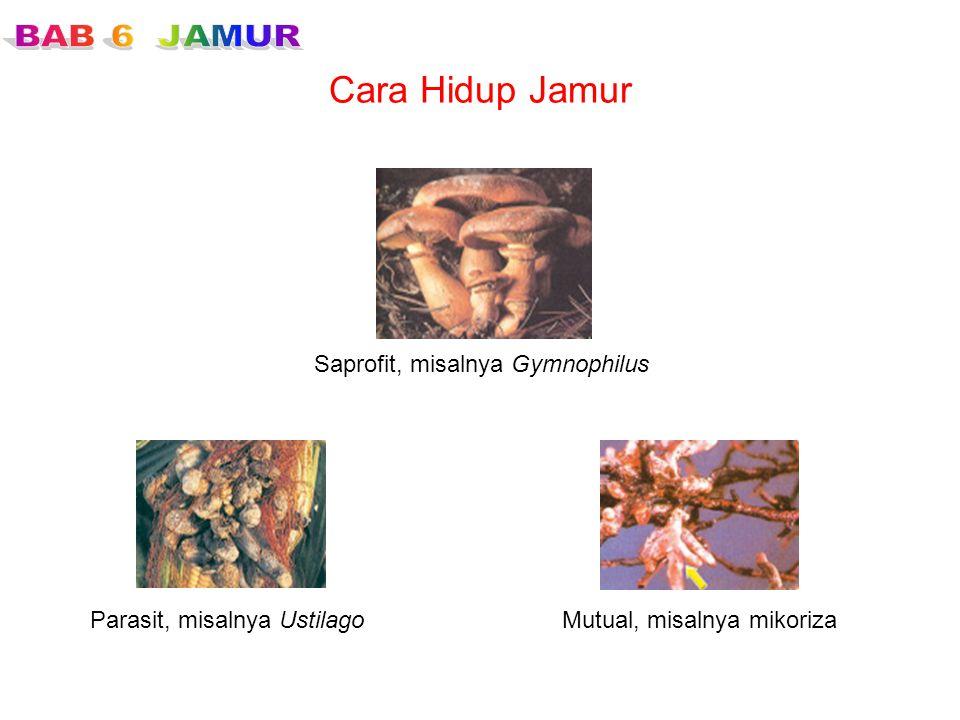 Cara Hidup Jamur Saprofit, misalnya Gymnophilus
