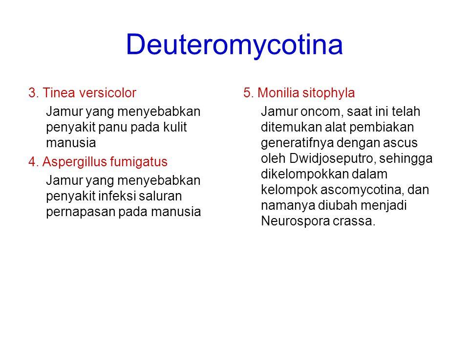 Deuteromycotina 3. Tinea versicolor