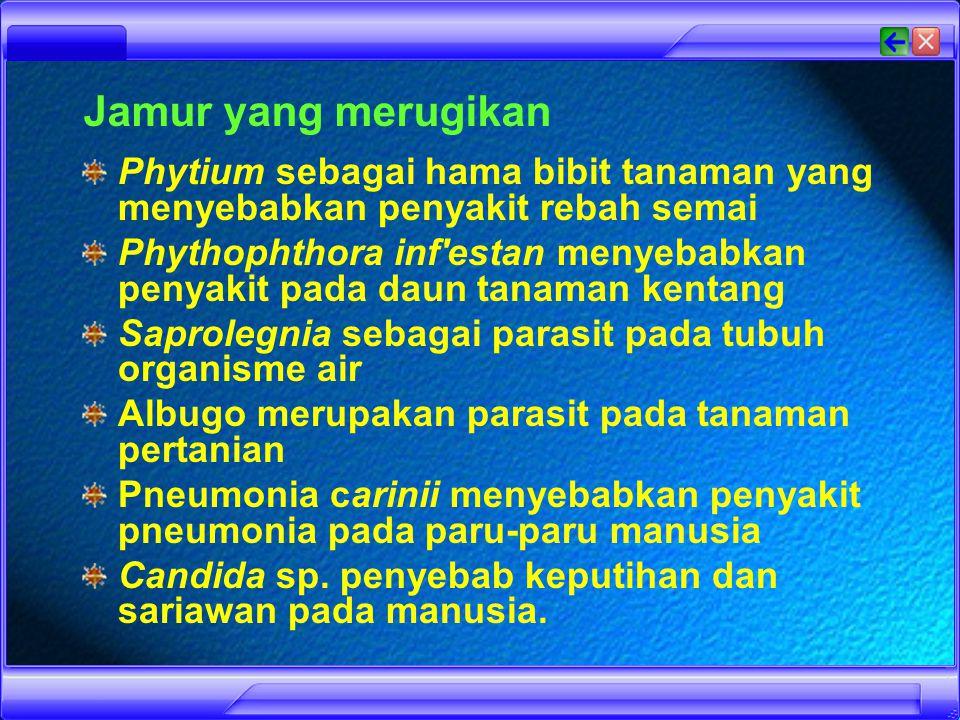 Jamur yang merugikan Phytium sebagai hama bibit tanaman yang menyebabkan penyakit rebah semai.