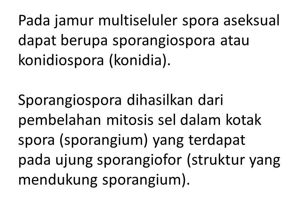 Pada jamur multiseluler spora aseksual dapat berupa sporangiospora atau konidiospora (konidia).