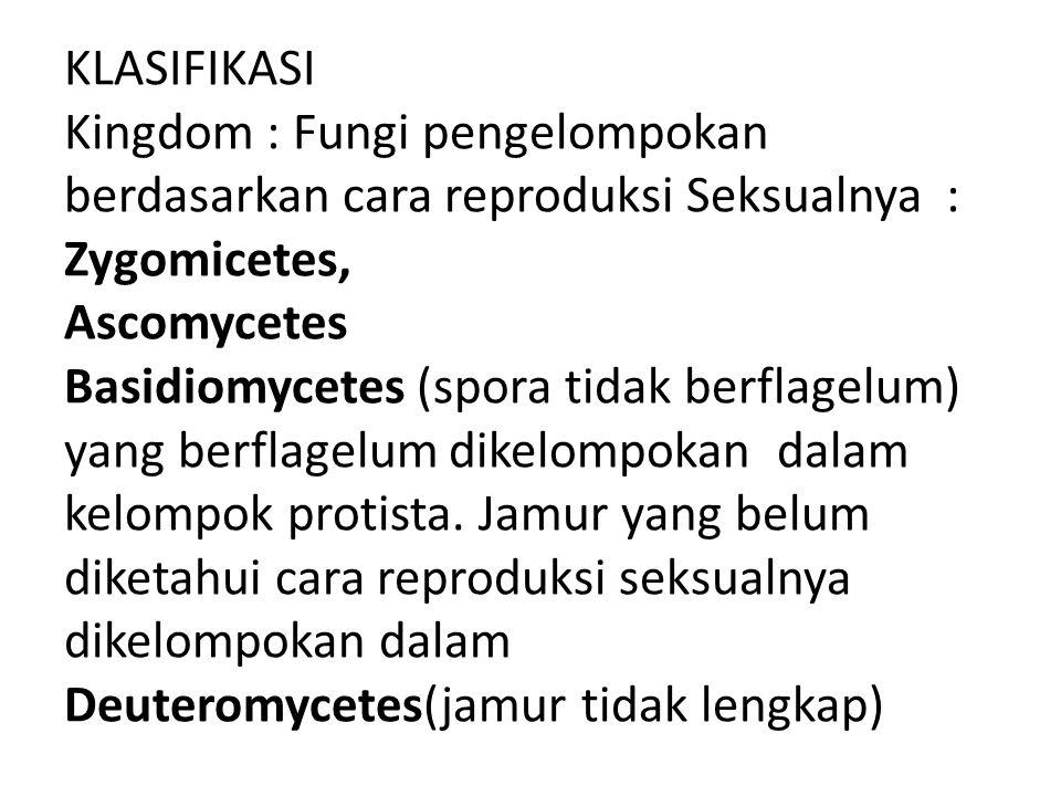 KLASIFIKASI Kingdom : Fungi pengelompokan berdasarkan cara reproduksi Seksualnya : Zygomicetes, Ascomycetes Basidiomycetes (spora tidak berflagelum) yang berflagelum dikelompokan dalam kelompok protista.
