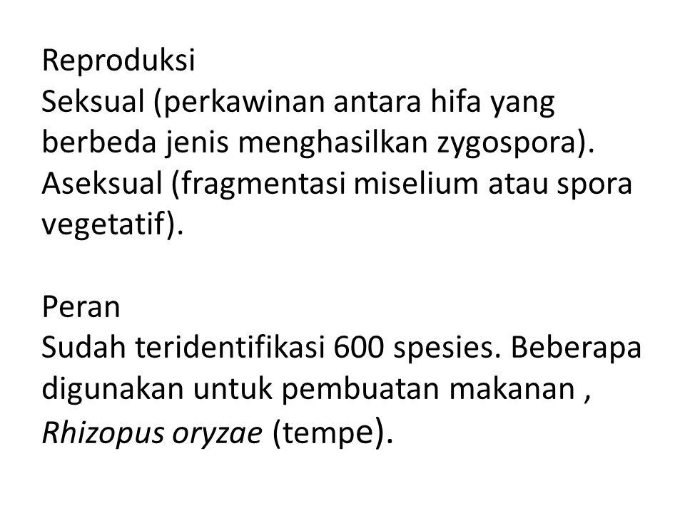 Reproduksi Seksual (perkawinan antara hifa yang berbeda jenis menghasilkan zygospora).
