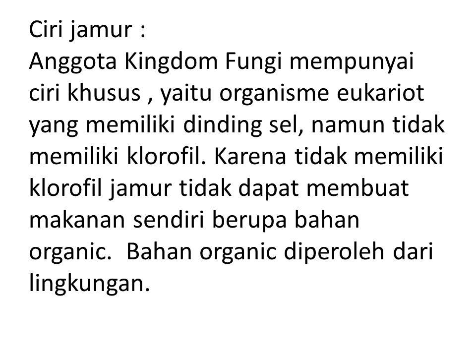 Ciri jamur : Anggota Kingdom Fungi mempunyai ciri khusus , yaitu organisme eukariot yang memiliki dinding sel, namun tidak memiliki klorofil.