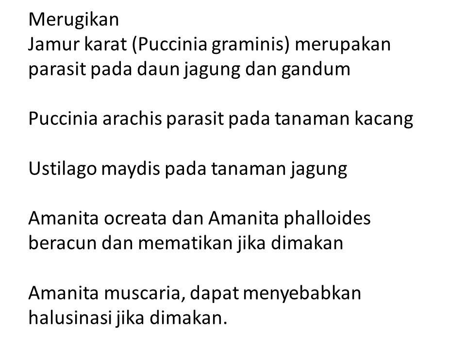 Merugikan Jamur karat (Puccinia graminis) merupakan parasit pada daun jagung dan gandum Puccinia arachis parasit pada tanaman kacang Ustilago maydis pada tanaman jagung Amanita ocreata dan Amanita phalloides beracun dan mematikan jika dimakan Amanita muscaria, dapat menyebabkan halusinasi jika dimakan.