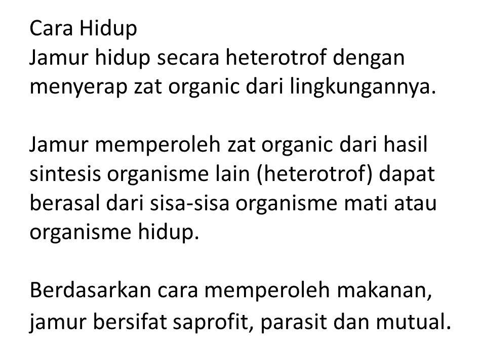 Cara Hidup Jamur hidup secara heterotrof dengan menyerap zat organic dari lingkungannya.