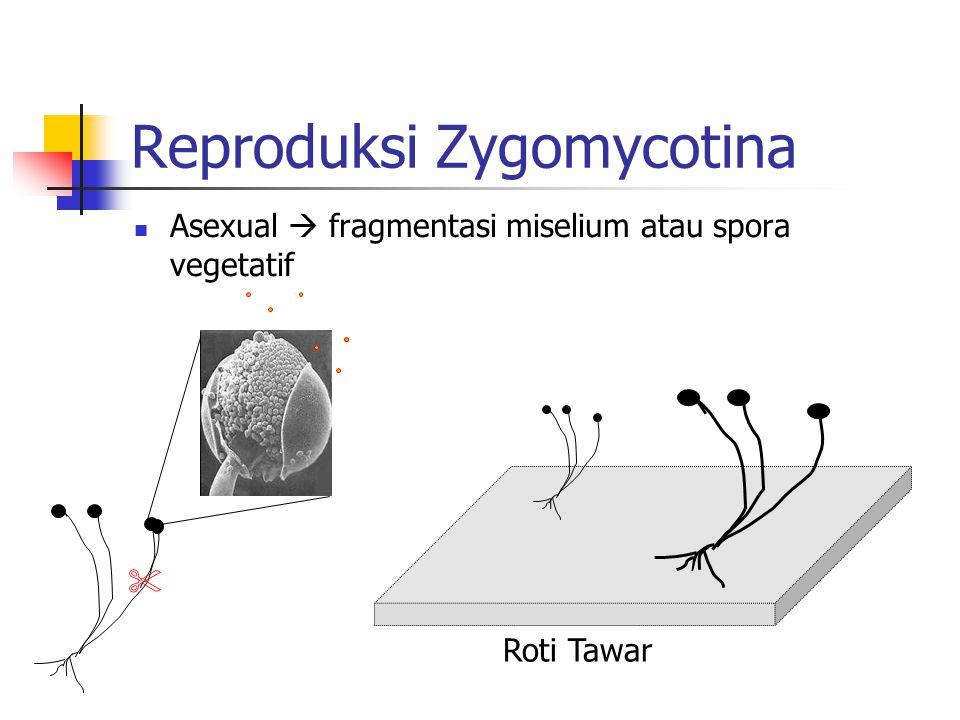 Reproduksi Zygomycotina