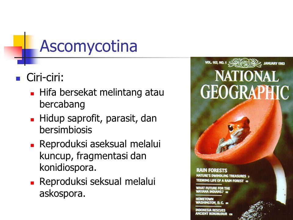 Ascomycotina Ciri-ciri: Hifa bersekat melintang atau bercabang