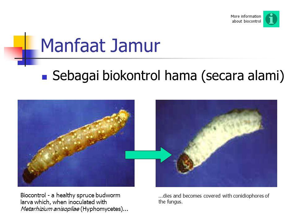 Manfaat Jamur Sebagai biokontrol hama (secara alami)
