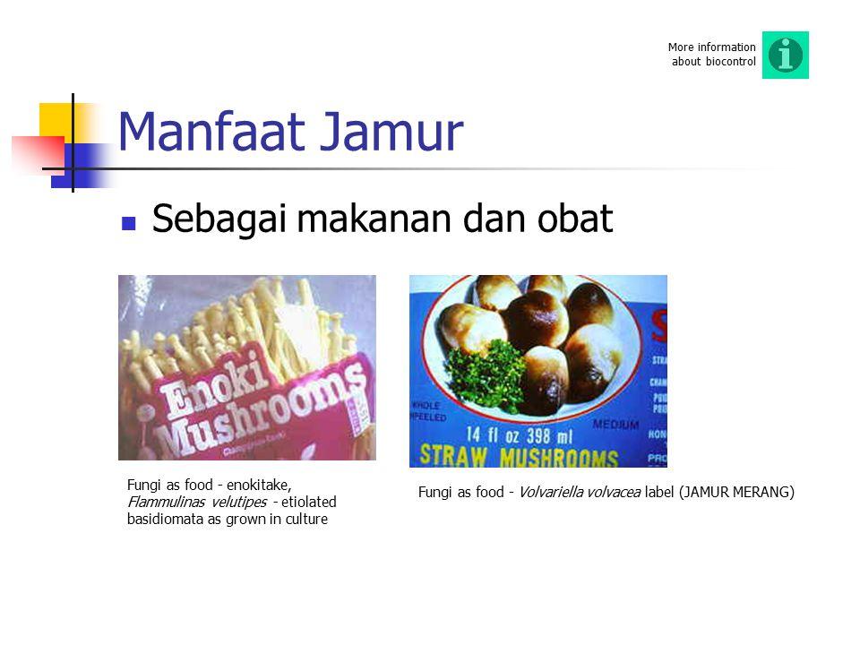 Manfaat Jamur Sebagai makanan dan obat