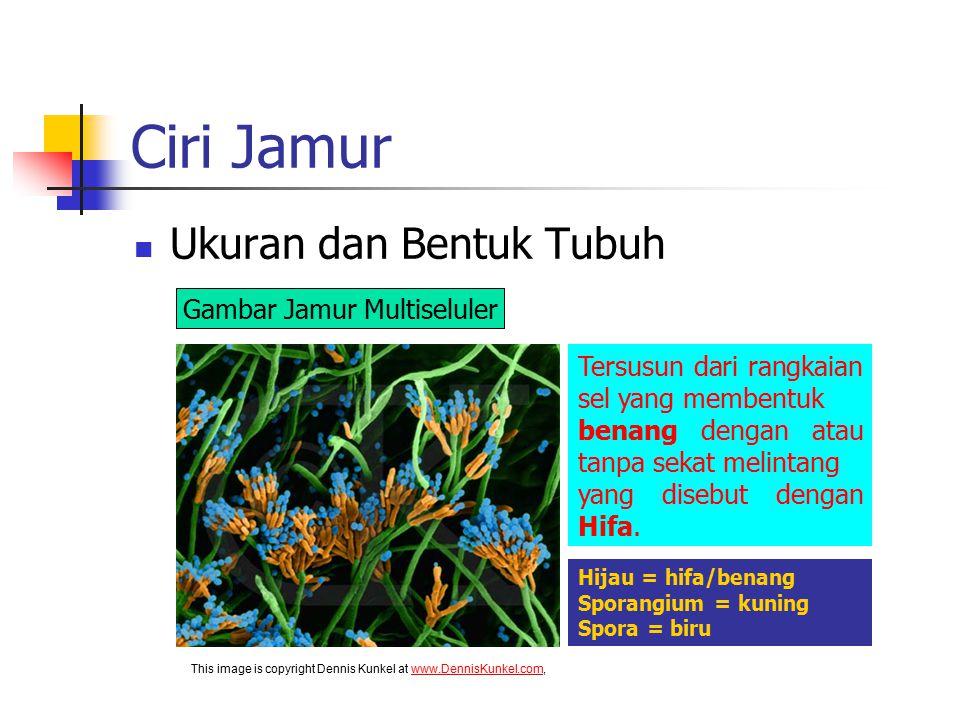 Ciri Jamur Ukuran dan Bentuk Tubuh Gambar Jamur Multiseluler