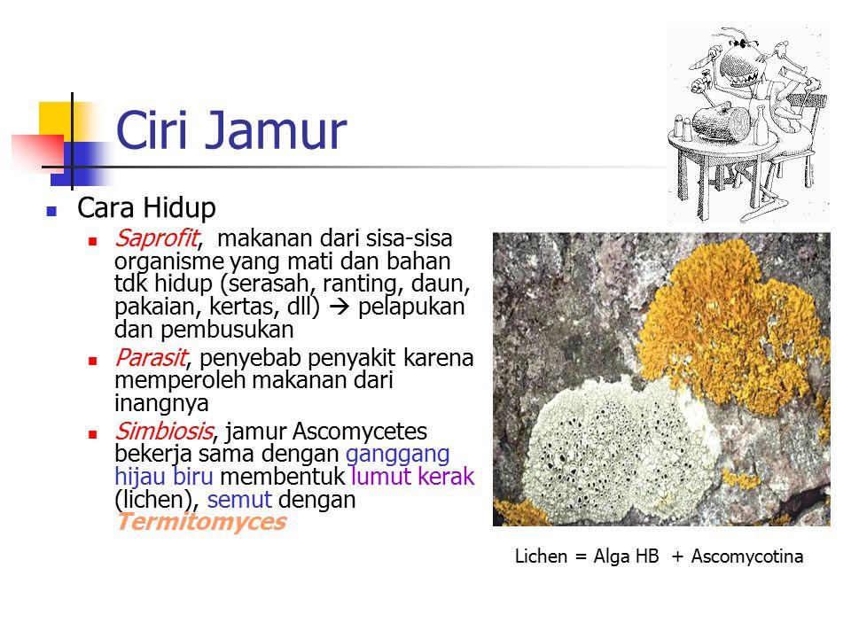 Lichen = Alga HB + Ascomycotina