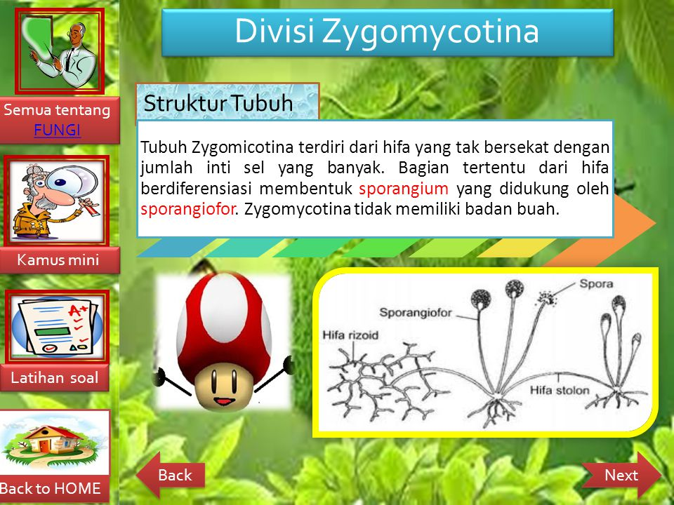 Divisi Zygomycotina Struktur Tubuh.