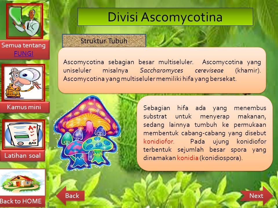 Divisi Ascomycotina Struktur Tubuh