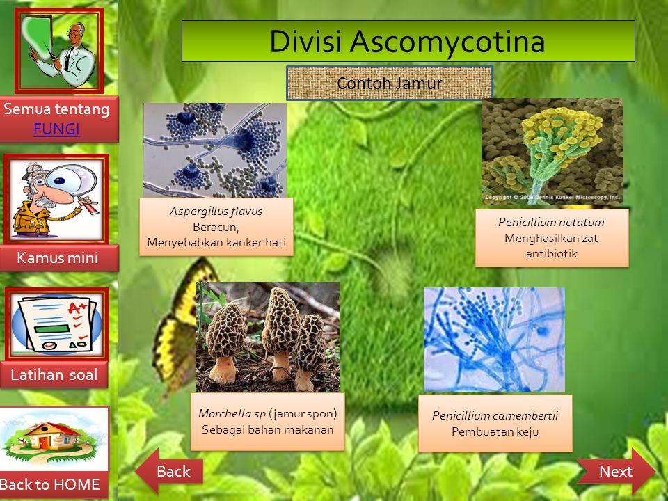 Divisi Ascomycotina Contoh Jamur Aspergillus flavus Beracun,