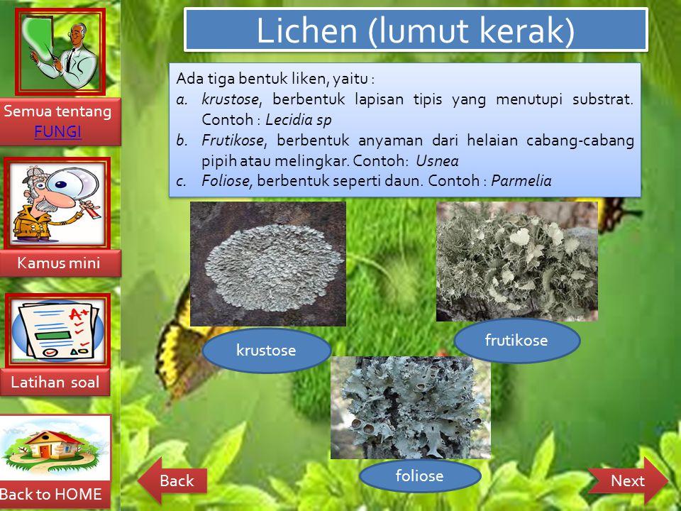 Lichen (lumut kerak) Ada tiga bentuk liken, yaitu :