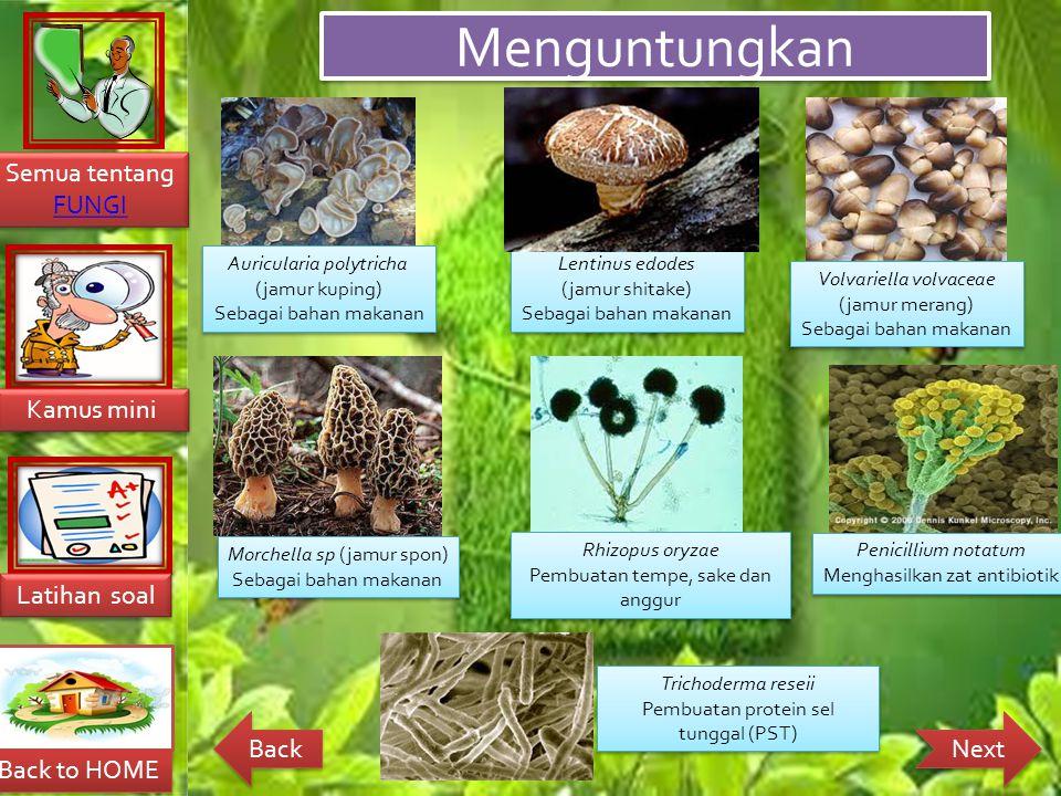 Menguntungkan Auricularia polytricha (jamur kuping)