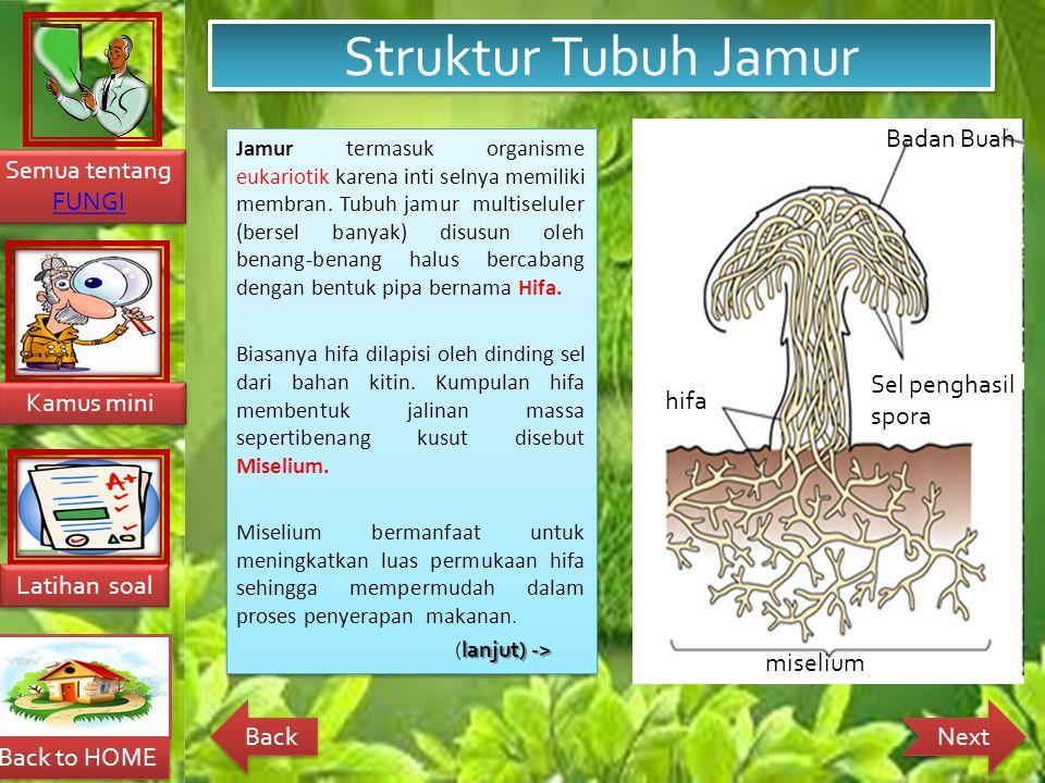Struktur Tubuh Jamur Badan Buah Sel penghasil spora hifa miselium