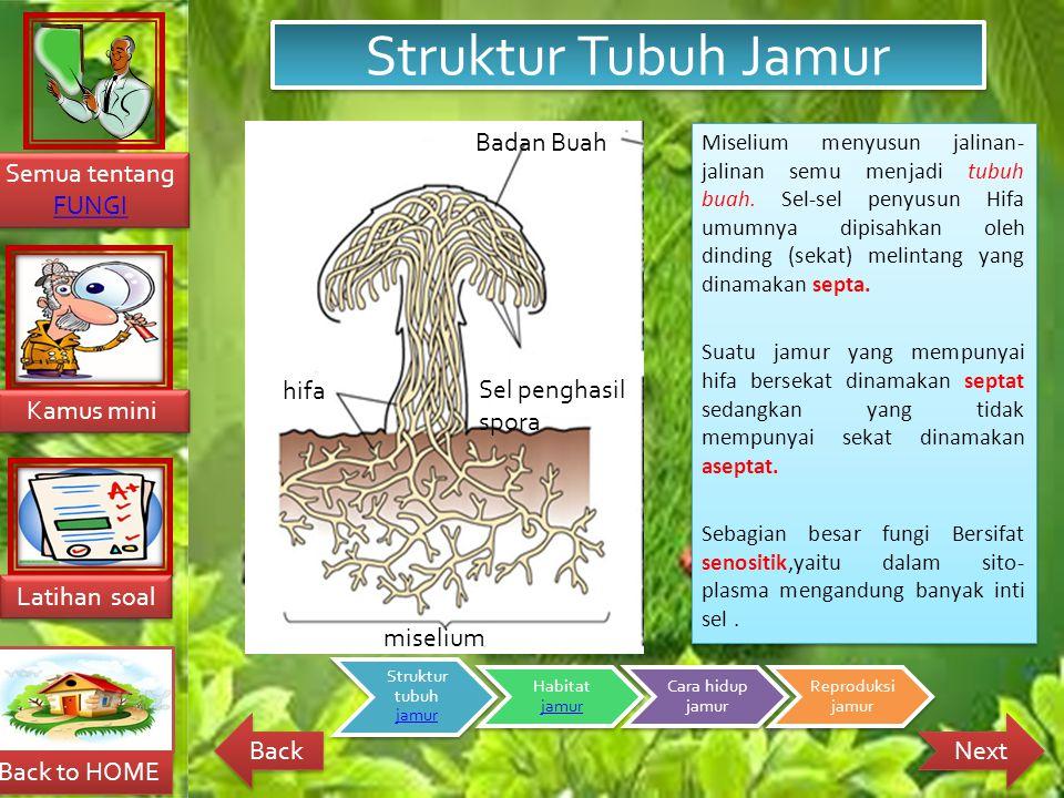 Struktur Tubuh Jamur Badan Buah hifa Sel penghasil spora miselium