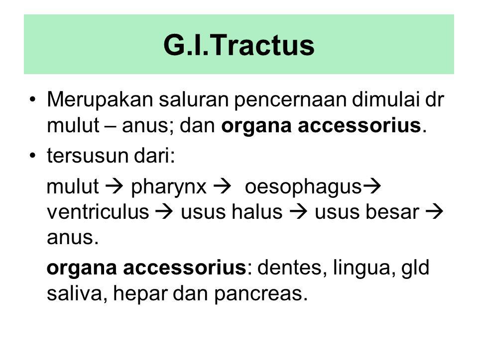 G.I.Tractus Merupakan saluran pencernaan dimulai dr mulut – anus; dan organa accessorius. tersusun dari: